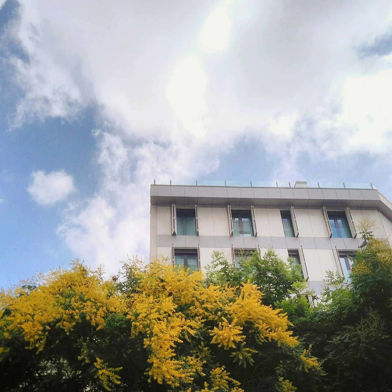 building exterior, tree, architecture, low angle view, yellow, built structure, day, outdoors, sky, no people, plant, cloud - sky, growth, nature, flower
