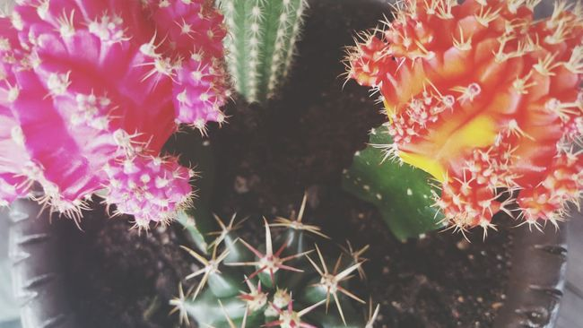 My babies Nature Art Flowers Plants Love Artist Photography Inspire Life Melbourneartists Createdaily Cactus
