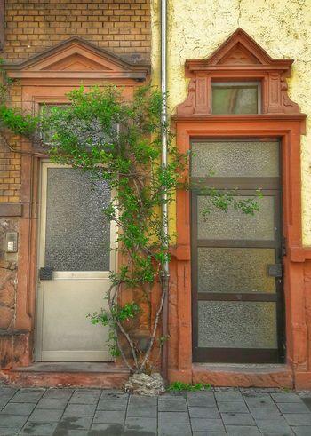 Door Architecture Building Exterior 2sides Gebäude Baum Bäumchen Wohnen Türen Worms