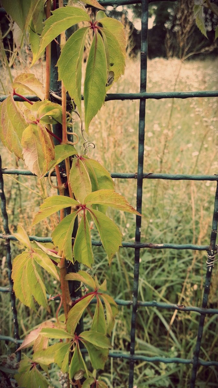 growth, nature, leaf, plant, green color, no people, close-up, day, outdoors, beauty in nature, tree
