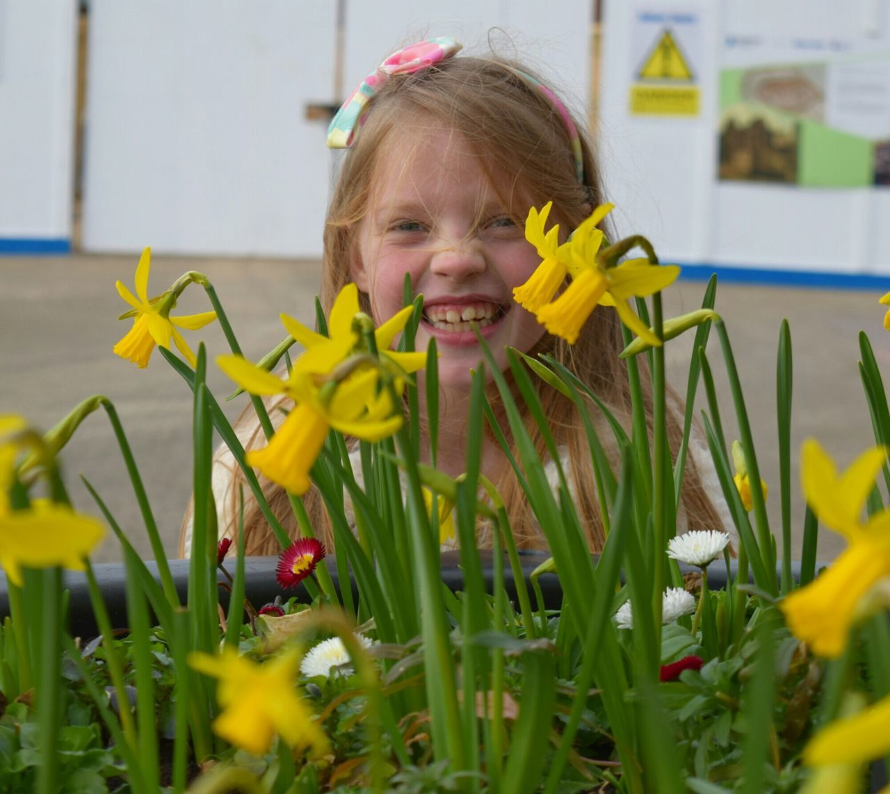 Our Emily Girl Child Laughter Hull Yorkshire Daffodils Street City Of Culture CoC2017 HullYes Spring City Of Culture 2017 Hull 2017 Urban Spring Fever