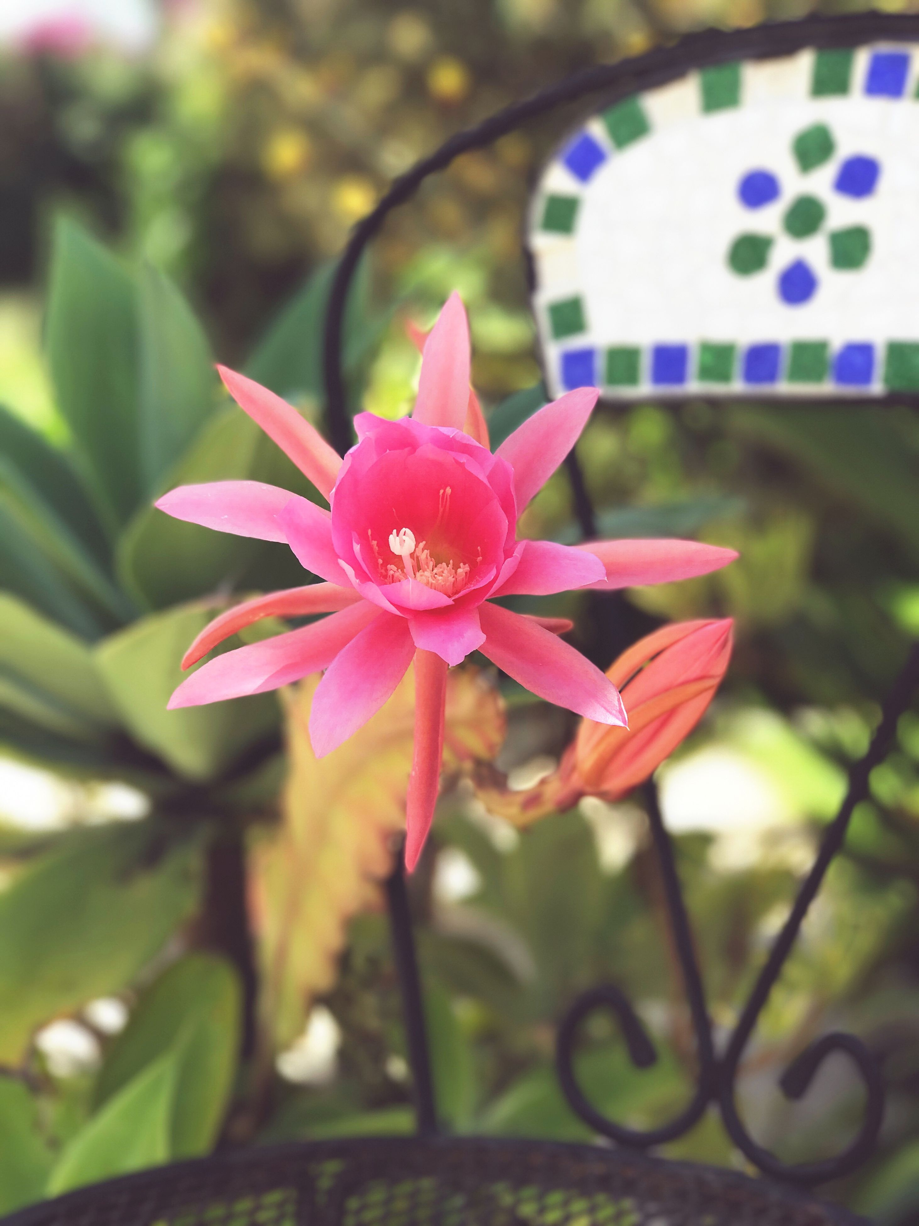 pink color, petal, flower, beauty in nature, fragility, growth, nature, flower head, close-up, no people, freshness, plant, blooming, day, outdoors, water