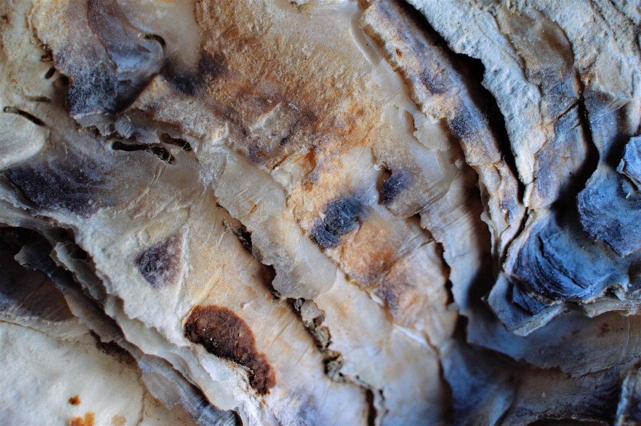 Close-up Danmark Denmark Nature No People Oyster Shell Textured  østersskal
