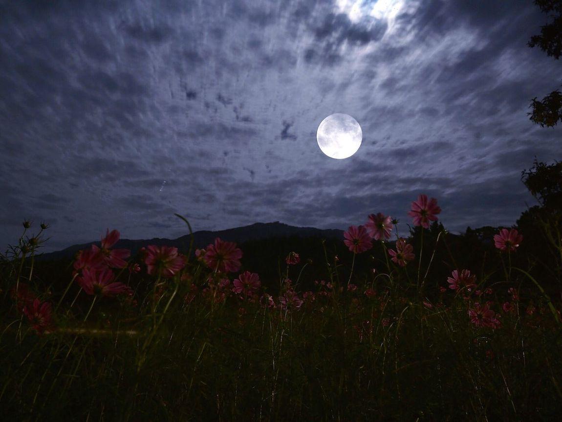 奈良県 EyeEm Best Shots Tommy@collection OpenEdit Japan Flowers Flower Lovely Moon Moonlight
