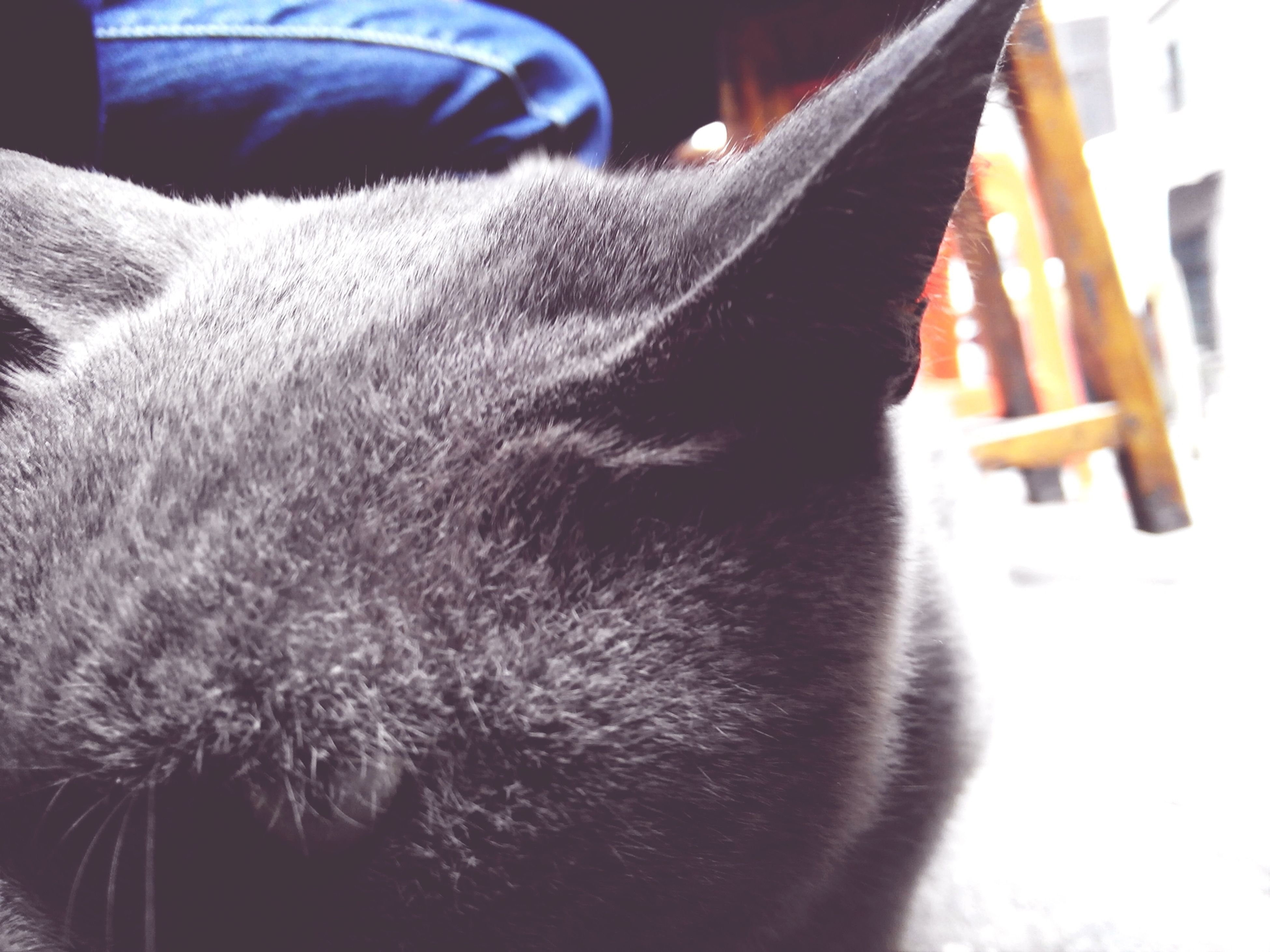 domestic animals, pets, one animal, mammal, animal themes, domestic cat, cat, feline, indoors, close-up, animal head, whisker, animal body part, sleeping, part of, relaxation, home interior, no people, cropped, eyes closed