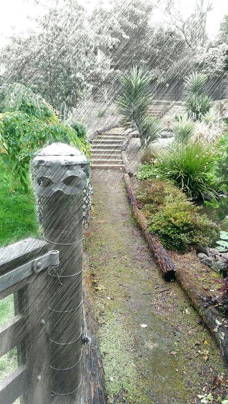 Buckland warrior helmet Pukekohe Taking Photos Buckland New Zealand Waikato pukekohe In My Garden