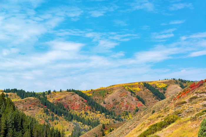 Beautiful colorful hills in southern Wyoming with red, yellow, orange, and green foliage set against a blue sky Alpine Bear Montana National Park Scenic Shoshone Travel Tundra USA Wanderlust Wyoming Beartooth Destination Forest Landscape Lodge Mountain Nature Overlook Peaks Range Shoshone National Forest Tooth Valley Wilderness