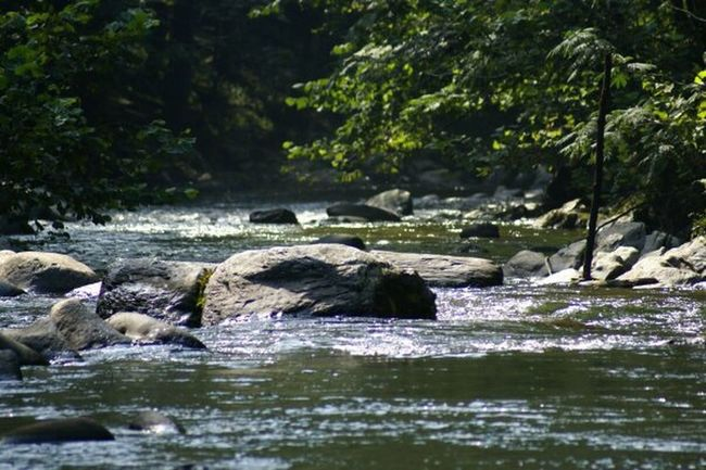 Water Flowing Tranquil Scene Flowing Water Nature River Beauty In Nature