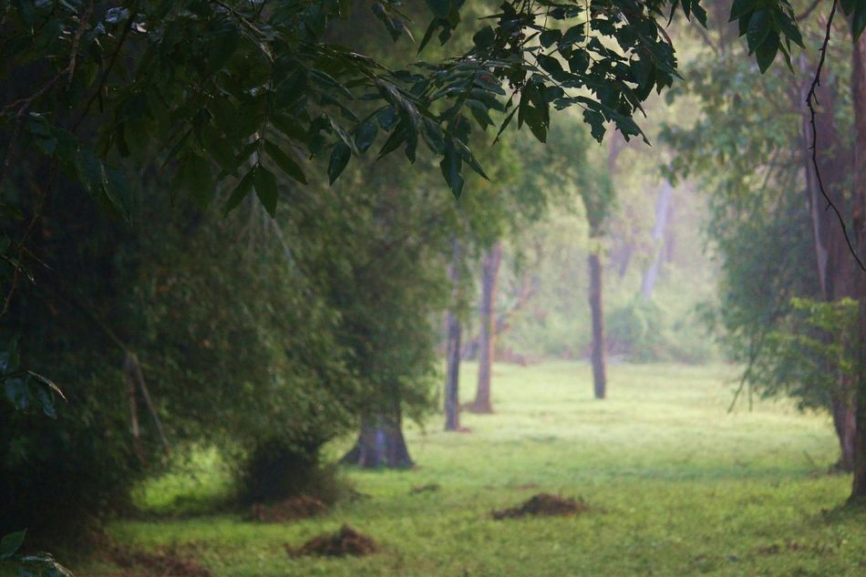 Into the Woods Onceuponatime Treeoflife Soltitude Walk Breathe First Eyeem Photo