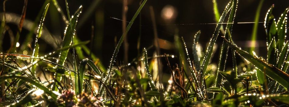 Gräser im Morgentau Natur Naturpur Grasses Dew Dewdrops_Beauty Dew #morning #drops #plant #nature Nature On Your Doorstep Nature_collection Nature_perfection EyeEm Gallery Ladyphotographerofthemonth Taking Photos Showcase August 2016 Things I Like Beauty In Ordinary Things Essence Of Summer I LOVE PHOTOGRAPHY