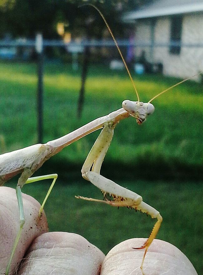 Taking Photos Check This Out Cheese! Nature Texas Wild Savage mantis