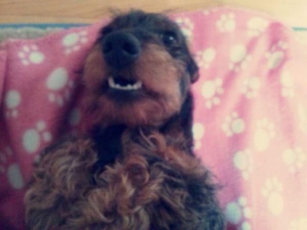 Dogoftheday Dogs Funny Dog My Lovely Dog <3