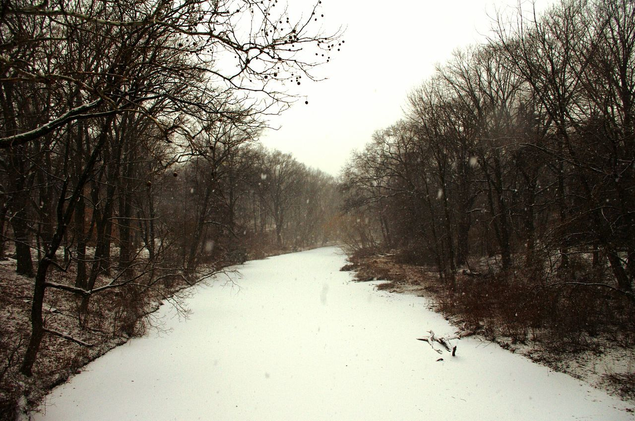 Snow Snowy Scene Snowytrees Snowyriver Winter Trees BronxRiver Whiteriver Bronx, New York TheBronxIsBeautiful