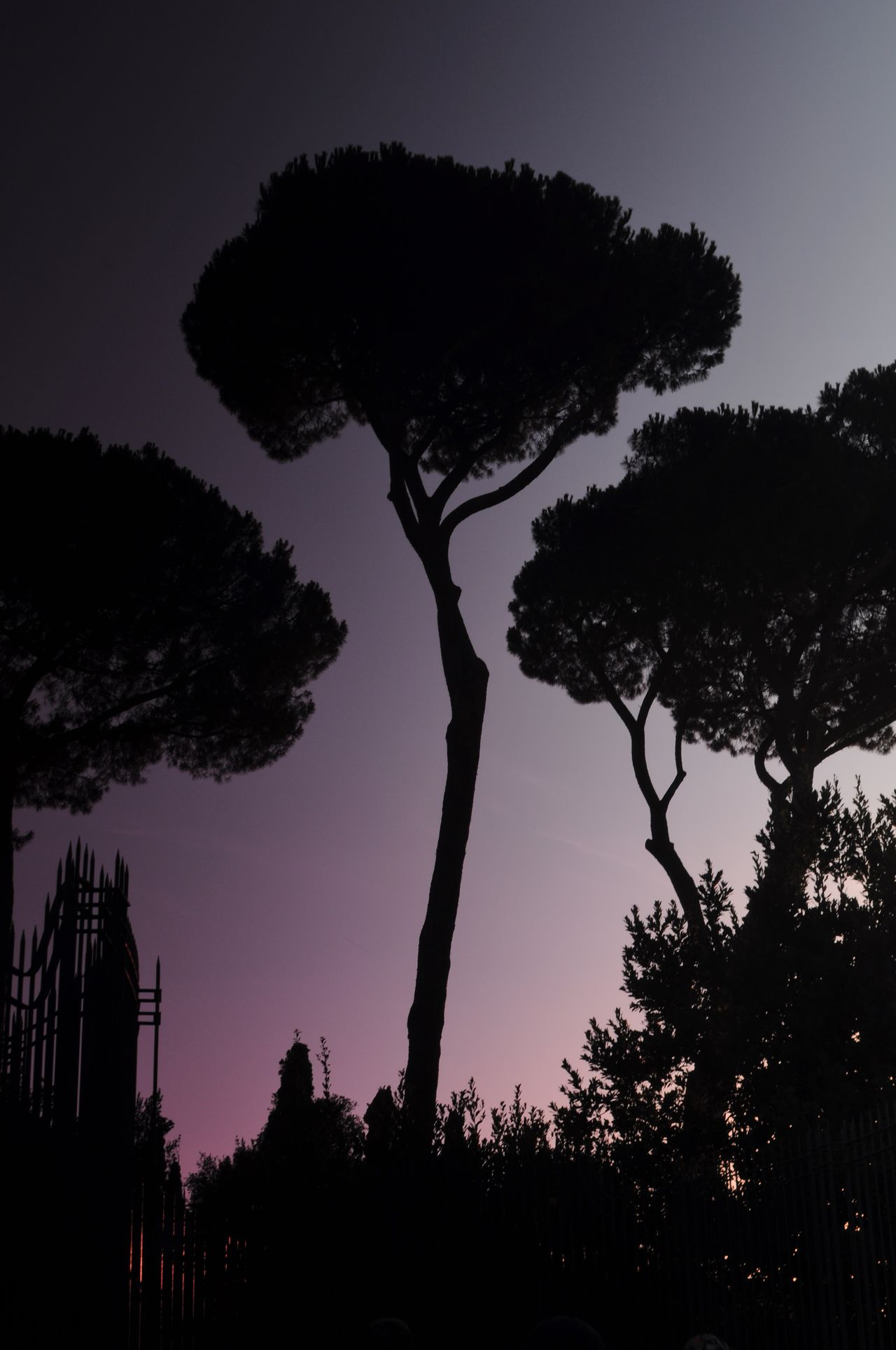 bäume am abend Bäume Evening light Growth Italia Silhouette Tree TreePorn Trees beauty in Nature Clear sky evening sky Growth italy Low angle view Nature night no people outdoors scenics Silhouette tranquil scene Tranquility Tree tree_collection trees and sky
