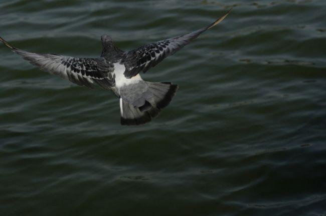 Birds Bird Water Birds In Flight