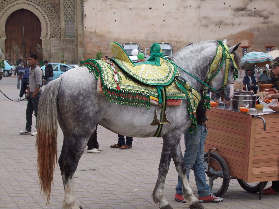 Horse Ride Animal Themes Arch Architecture Composition Dappled Horse Domestic Animals Full Frame Grey Horse Horse Incidental People Meknès Moroccan Architecture Morocco No People Ornate Saddle Outdoor Photography Saddle Square Tourism Tourist Attraction  Tourist Destination Tourist Ride Working Horse