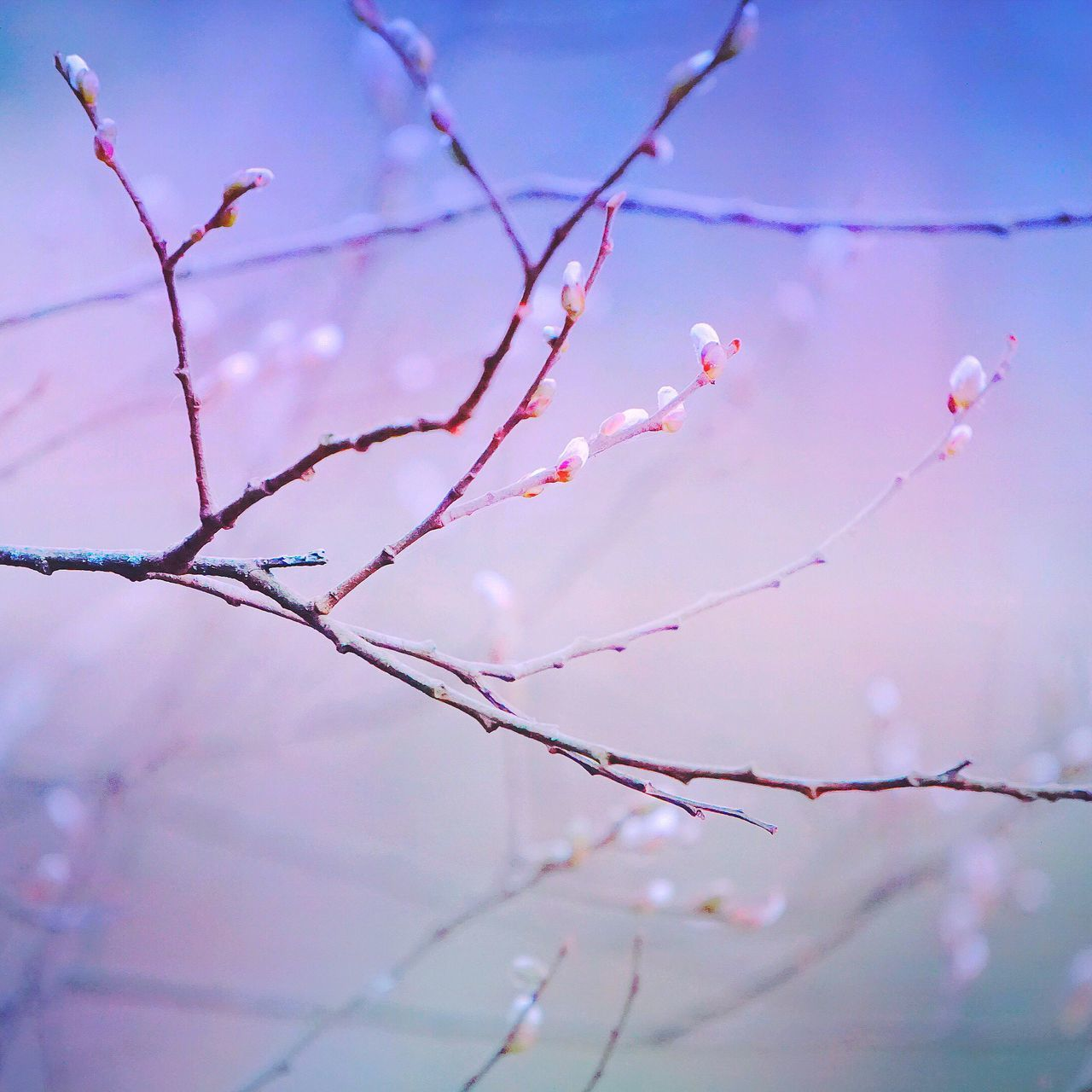 Nature Beauty In Nature Outdoors No People Day Branch Pink Color Fragility Close-up Growth Sky Flower Freshness Tree Sky Light Macro Minimalism Abstract Branches Trees Beauty In Nature Tranquil Scene