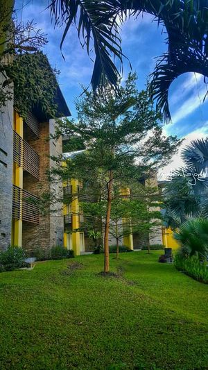 Architecture Building Exterior Tree Grass Green Color Outdoors Beauty In Nature