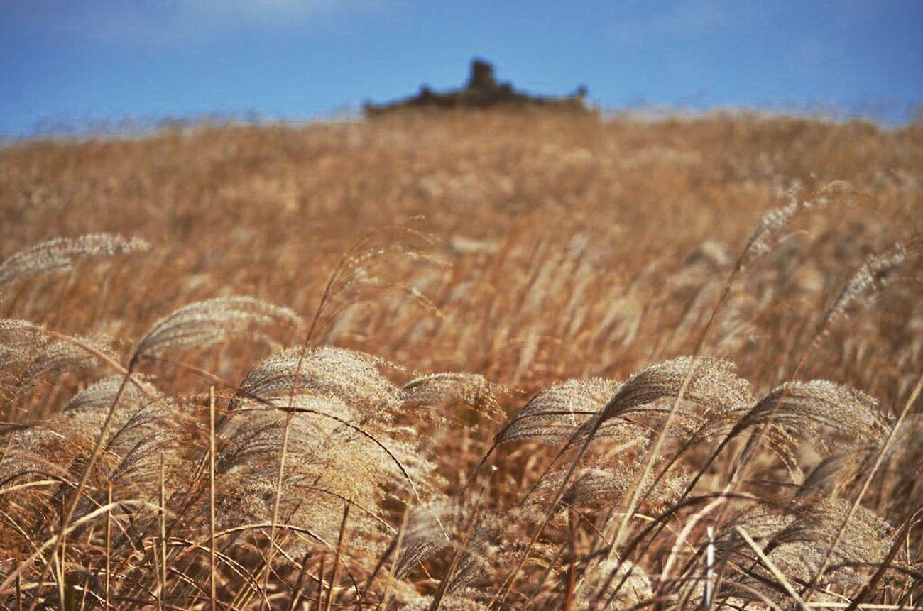 Field. Rural Scene Nature Beauty In Nature Wheat Close-up