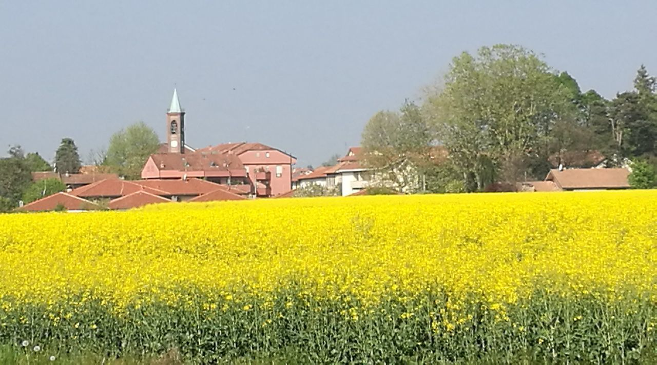 yellow, agriculture, field, nature, crop, oilseed rape, landscape, beauty in nature, growth, no people, built structure, rural scene, architecture, flower, tree, outdoors, day, sky