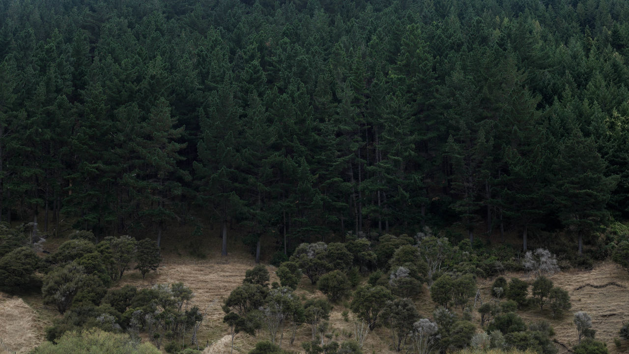 Beauty In Nature Canon Day Evergreen Tree Forest Green Color Growth Landscape Lush - Description Lush Foliage Maitai Nature New Zealand No People Outdoors Plant Scenics Tranquil Scene Tranquility Tree EyeEmNewHere