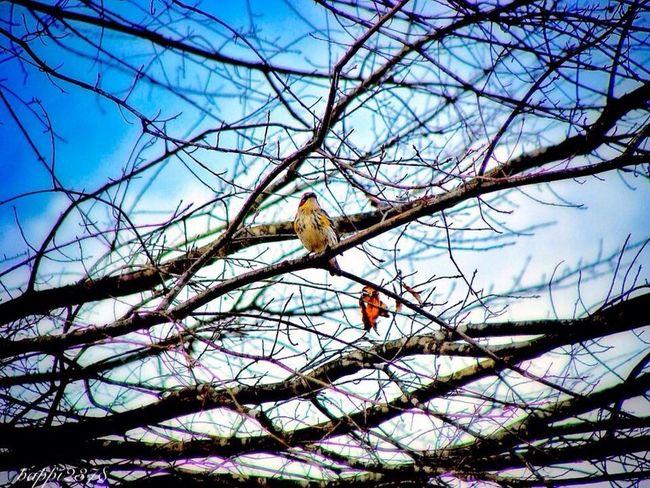 Nature Nature_collection EyeEm Best Shots EyeEm Nature Lover
