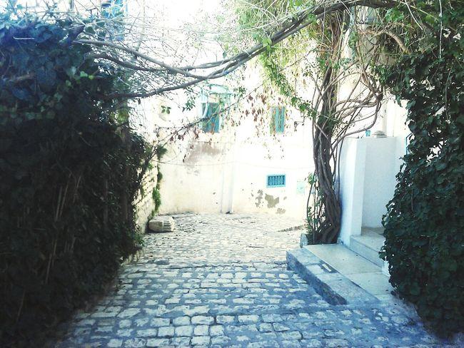Bou Makhlouf <3 Kef Beautiful ♥ Inspiration Taking Photos