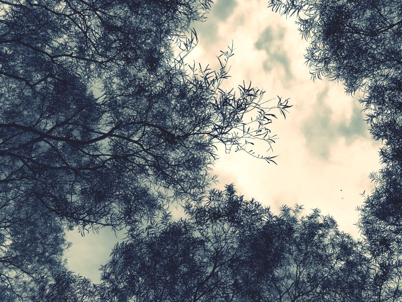 Low Angle View Of Tree Against Overcast Sky