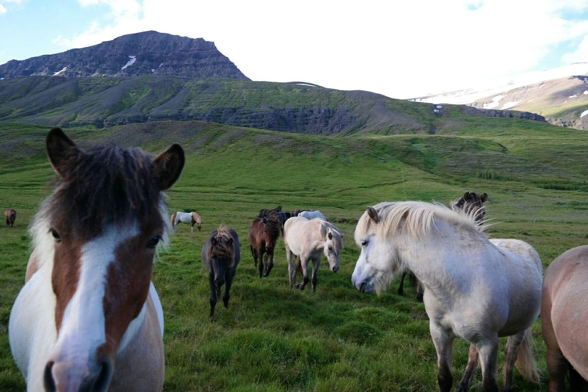 Hallo World Enjoying Life Summer In The Contry Horses Nature Photography Landscape_Collection Nature_collection Enjoying Nature From My Point Of View Summer2015