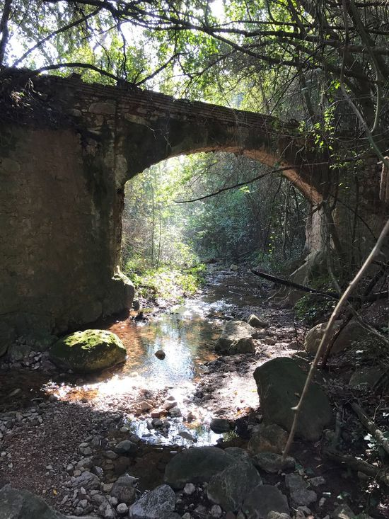 Pont de Can Senosa Nature First Eyeem Photo