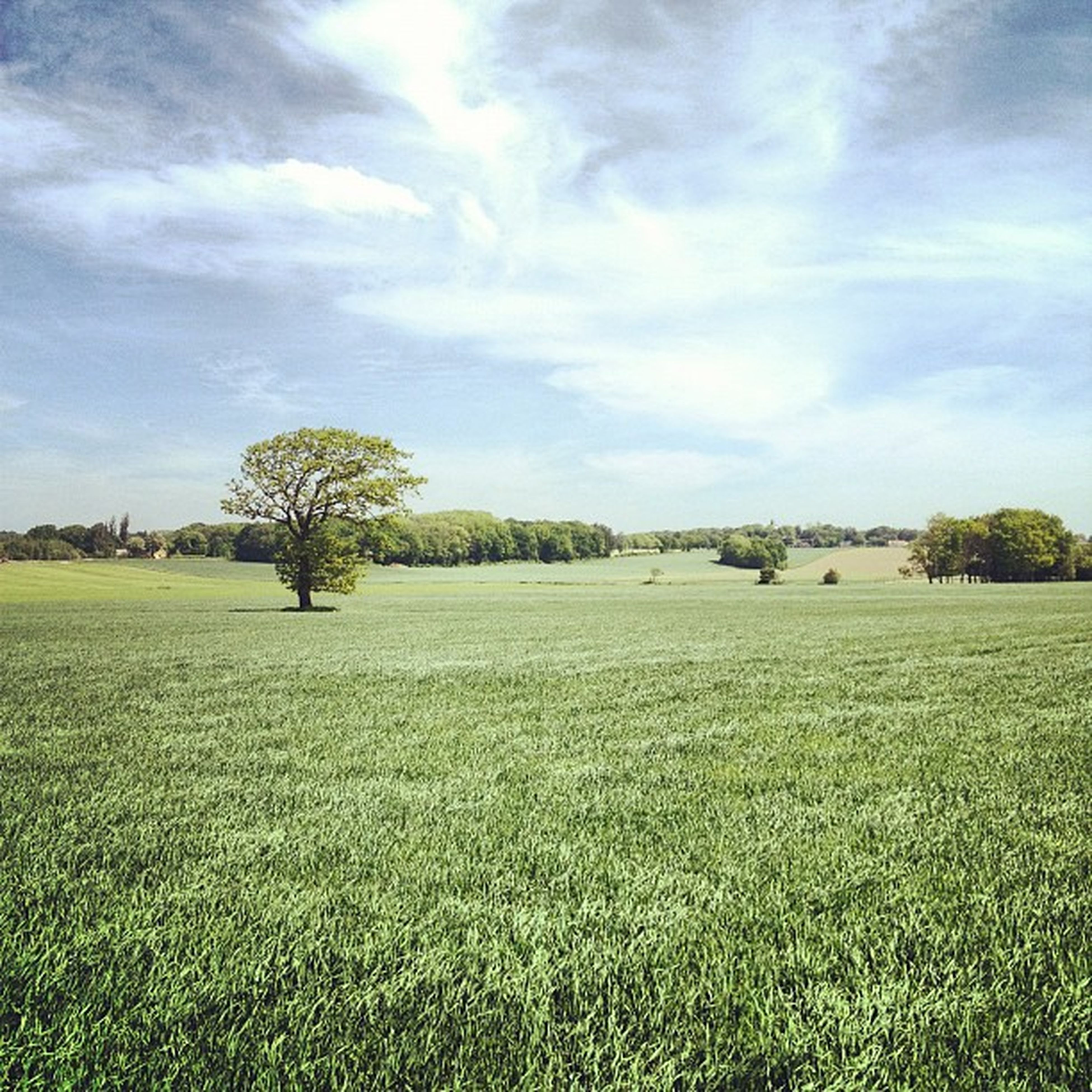 field, grass, landscape, sky, tranquil scene, tranquility, scenics, growth, beauty in nature, tree, rural scene, green color, nature, cloud - sky, grassy, agriculture, cloud, farm, idyllic, crop
