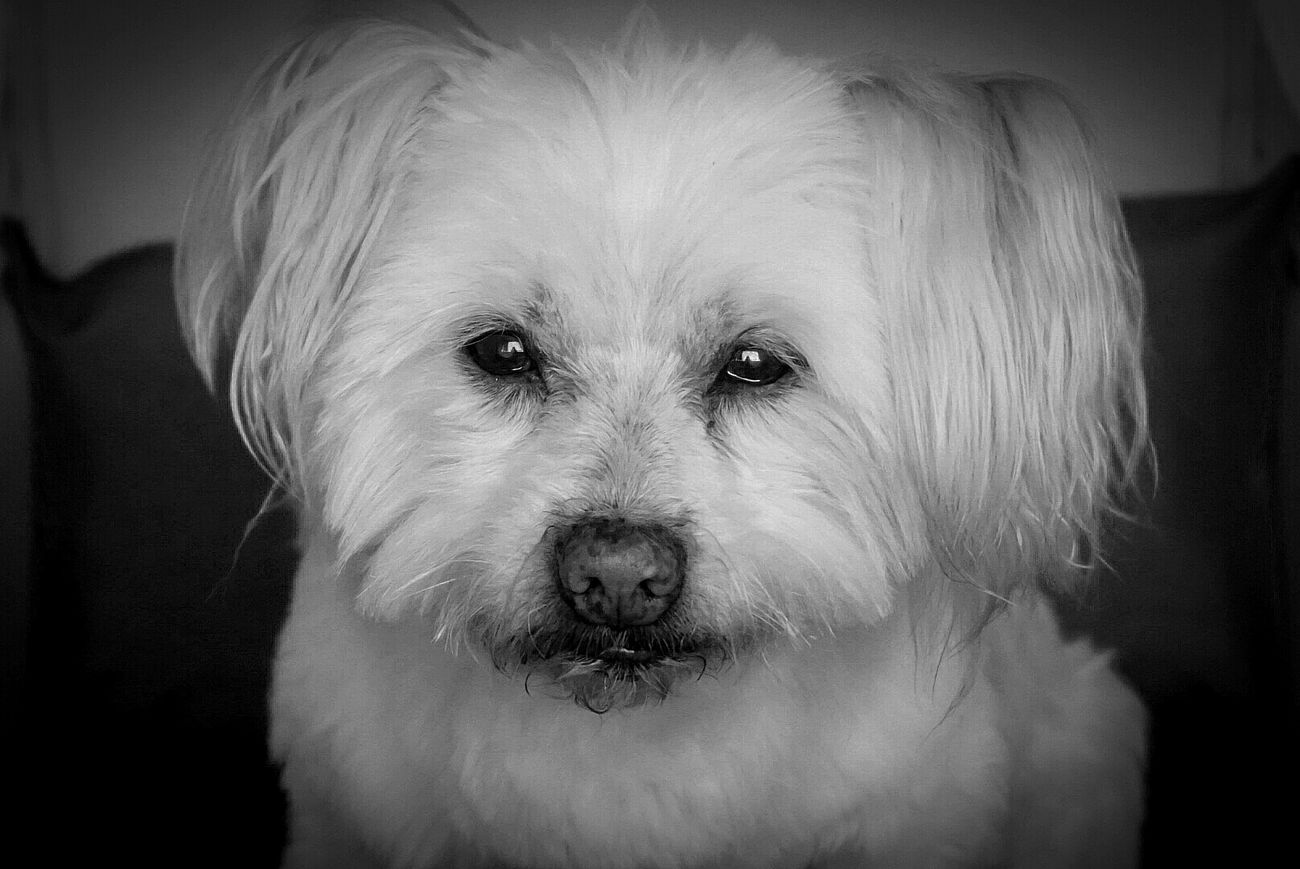 Bientôt 17 ans que tu partages ma vie... Je t'aime 💜 Dog Dog Love Black And White EyeEm Love Ofmylife 17yearsold Beautiful Pets White Dog Bestfriend Photooftheday Photography Photoshoot Hapiness Allmylife