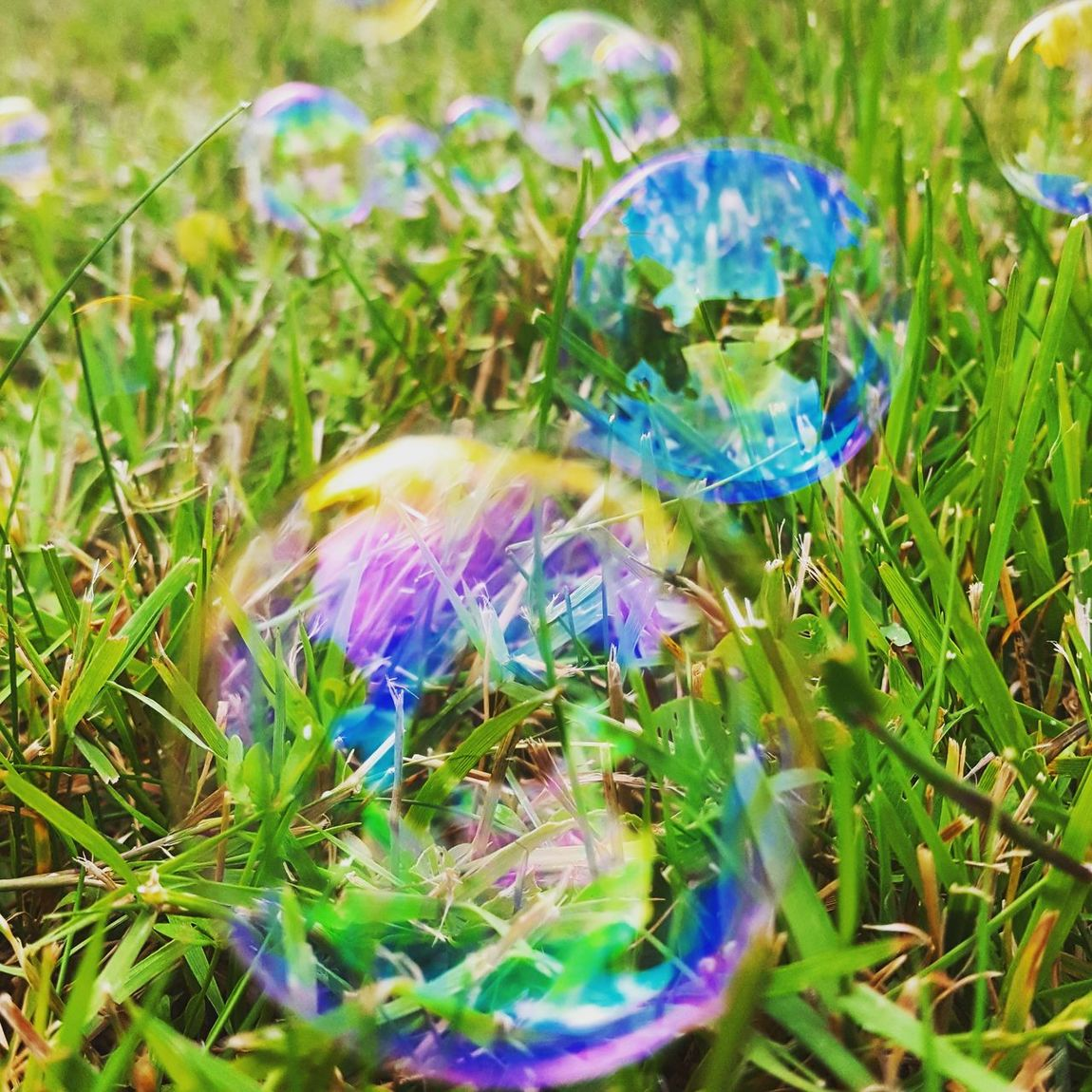 BubbleBubble Onthagrass Reflect Colorful The OO Mission Best EyeEm Shot Perfect Moment