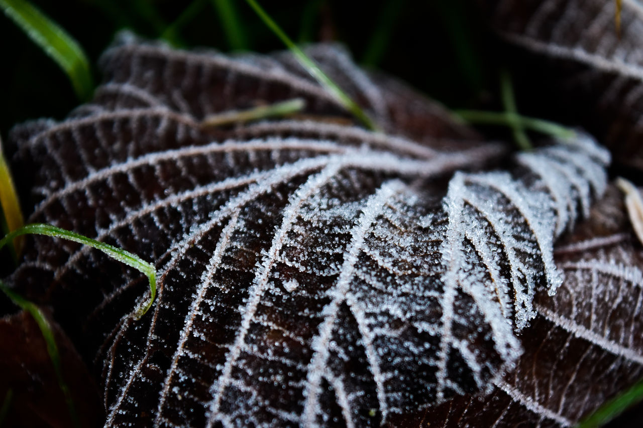 close-up, nature, no people, beauty in nature, pattern, leaf, outdoors, fragility, winter, day, freshness