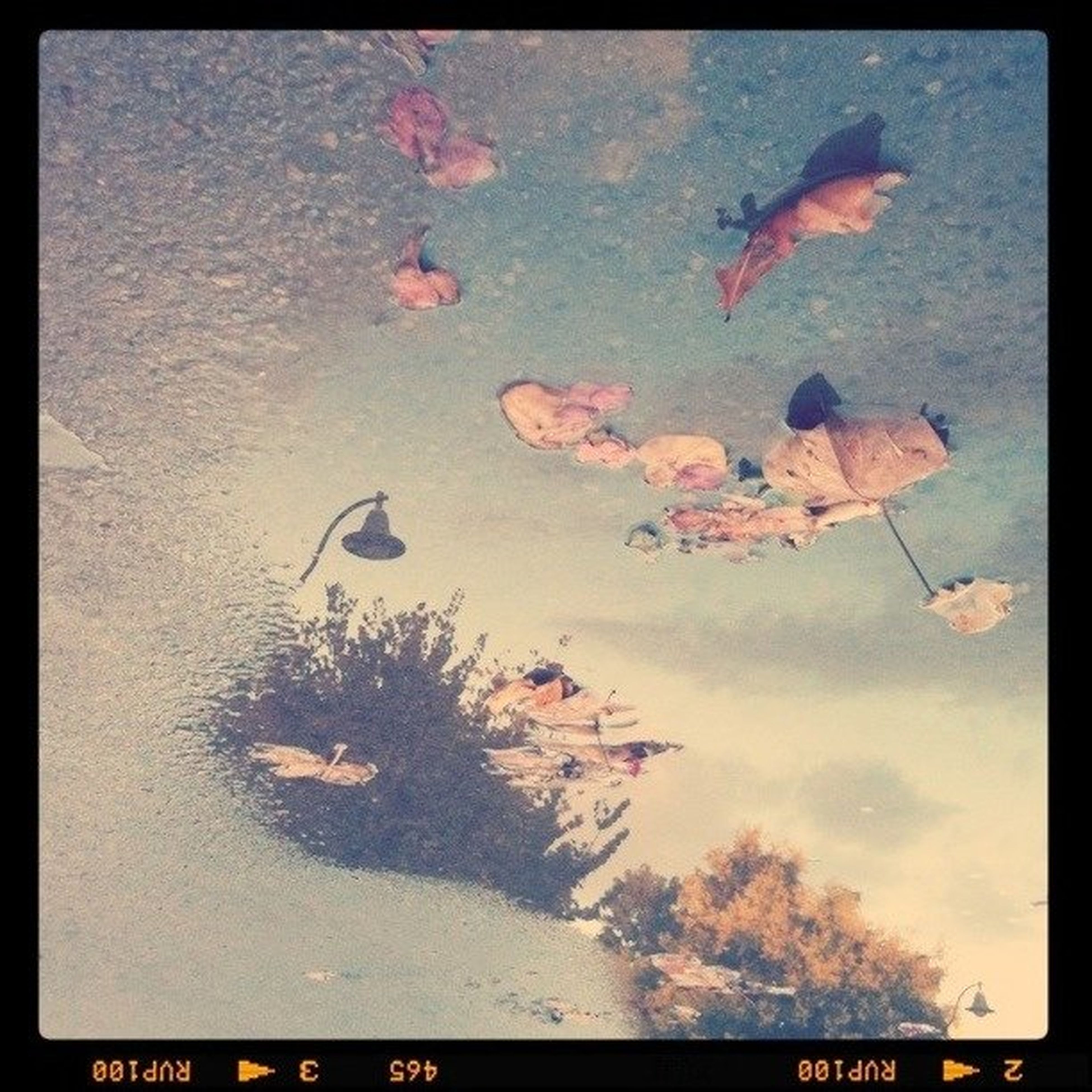 transfer print, auto post production filter, bird, high angle view, nature, animal themes, wildlife, outdoors, no people, animals in the wild, leaf, day, autumn, tree, orange color, low angle view, beauty in nature, change, tranquility