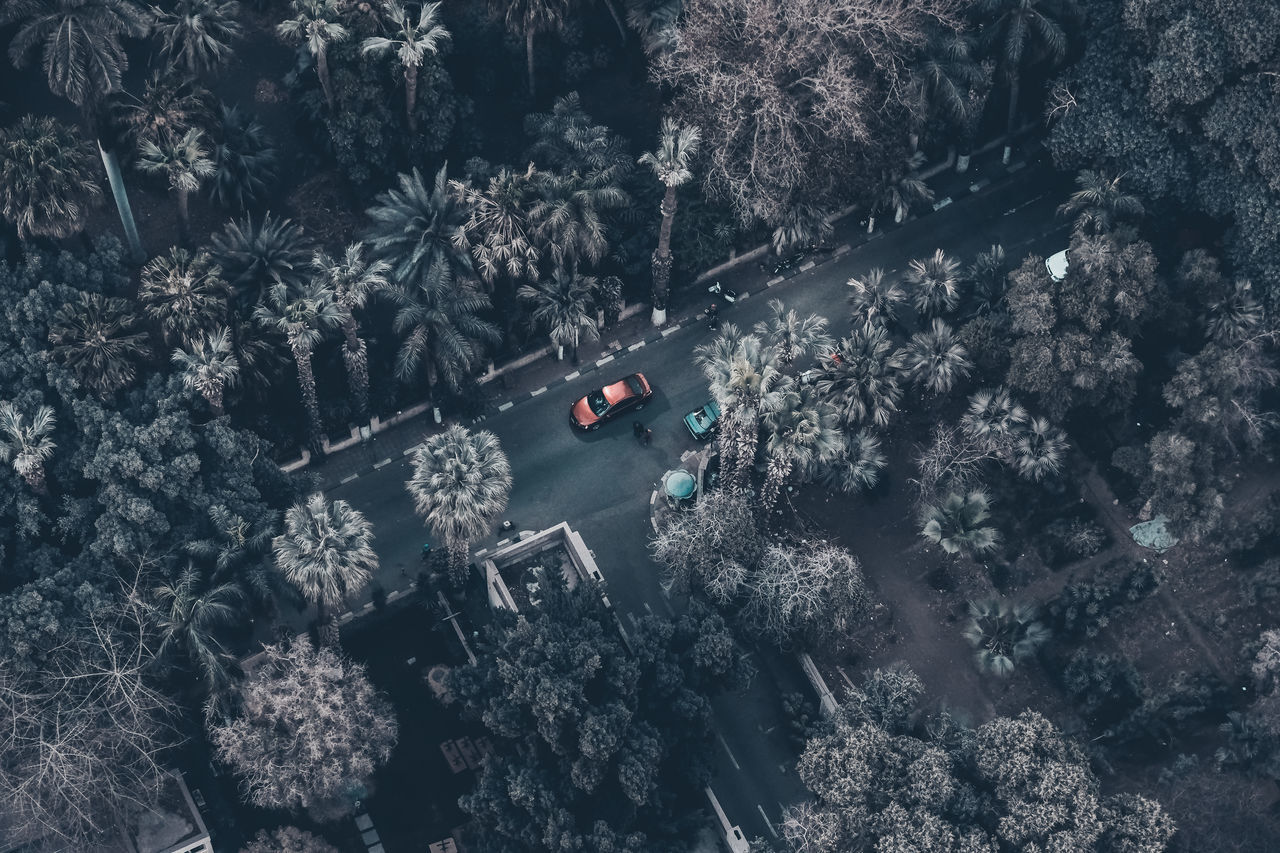 Aerial View Car Check This Out Cold Temperature Day Exceptional Photographs First Eyeem Photo Flying High High Angle View Land Vehicle Mode Of Transport Nature No People Outdoors Palm Tree Popular Photos Public Transportation Rail Transportation Snow Streetphotography Transportation Tree Winter