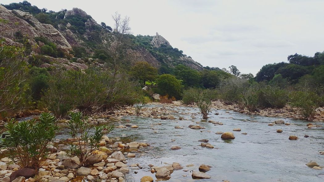 Nature SPAIN Hiking Adventures Looking For Adventures Love Hiking River Life Jimena De La Frontera River Walk Riverbank Riverside River View Hikinglife Mountain Water Earth River Trees Forrest The KIOMI Collection