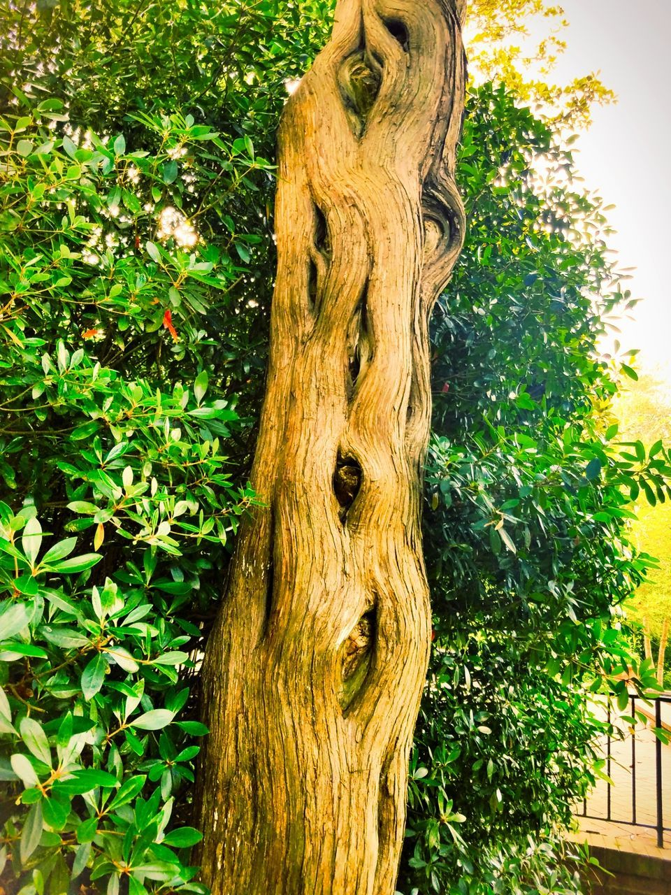 tree, tree trunk, nature, growth, no people, green color, plant, day, outdoors, branch, close-up