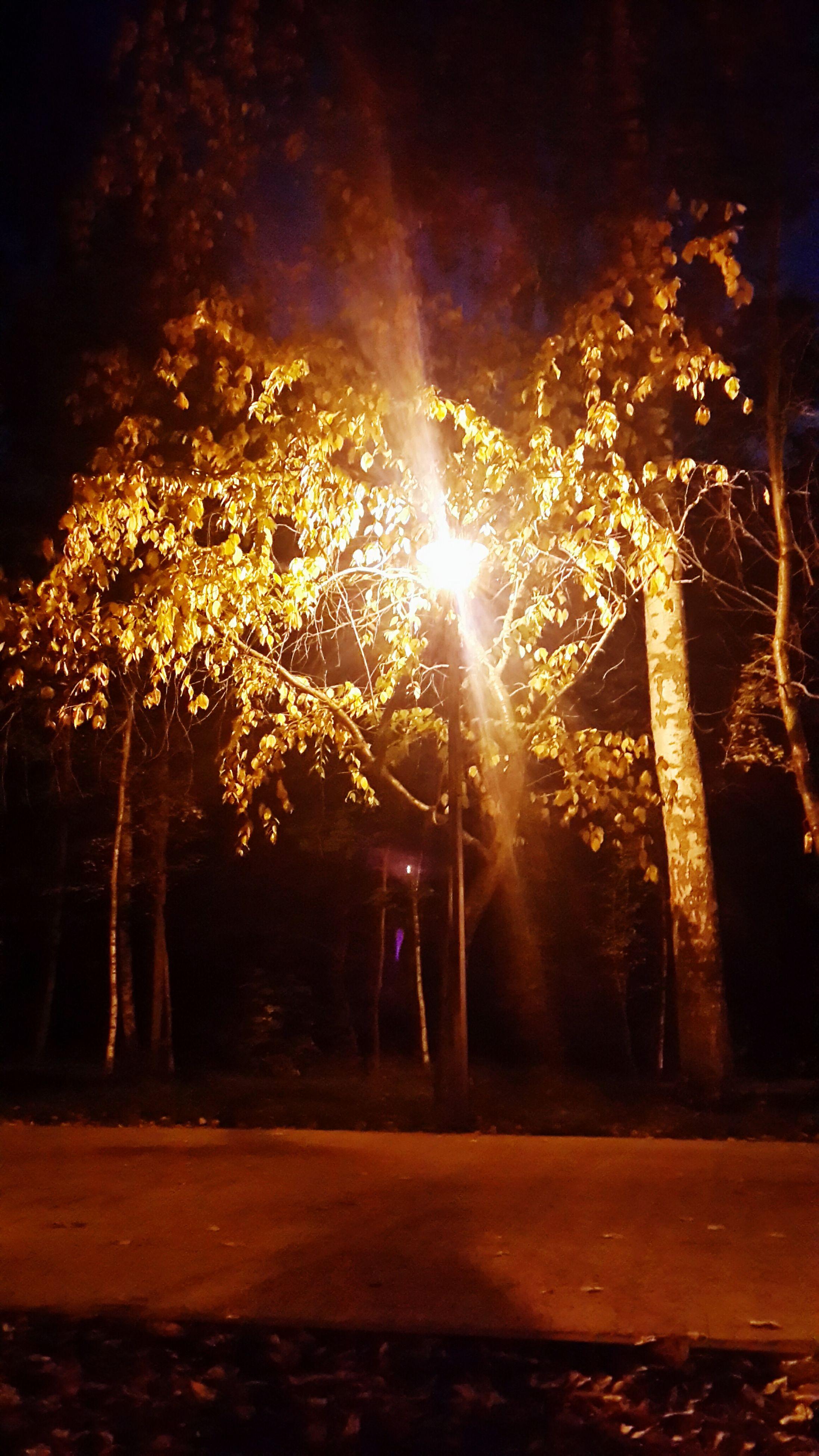 tree, night, illuminated, sunlight, lens flare, sun, sunbeam, glowing, nature, street light, street, the way forward, outdoors, tranquility, light - natural phenomenon, back lit, silhouette, growth, no people, sky