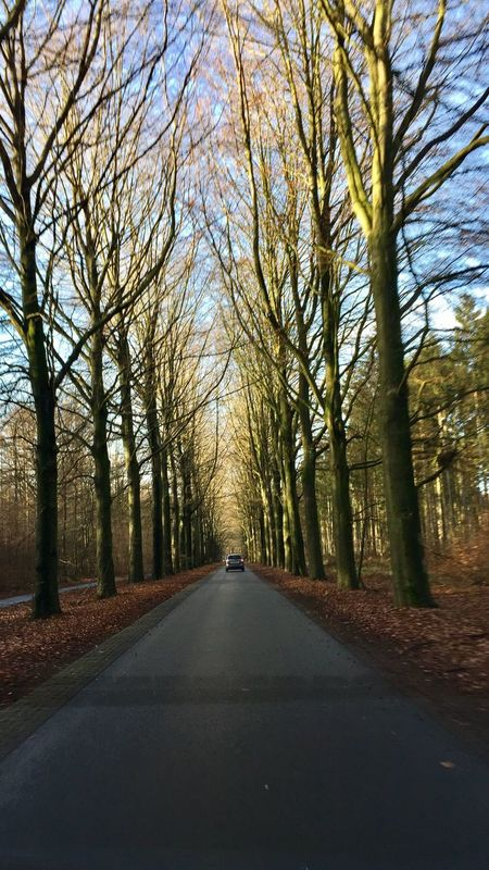 Lonely Road Tree Lined Road Winter Driving Forest Drive Nature Diminishing Perspective Tranquility Escape The City