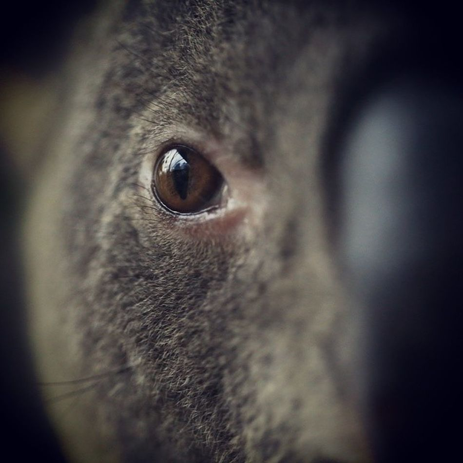koala stares Vividsidney /vividsidney @vividsidney @NSWtips Ilovesidney Newsouthwales @VividSidney Vividsidney @sydney_sider Ilovesidney Newsouthwales @sidney Newsouthwales NSW @VisitNSW sydney.com Ilovesidney Visit