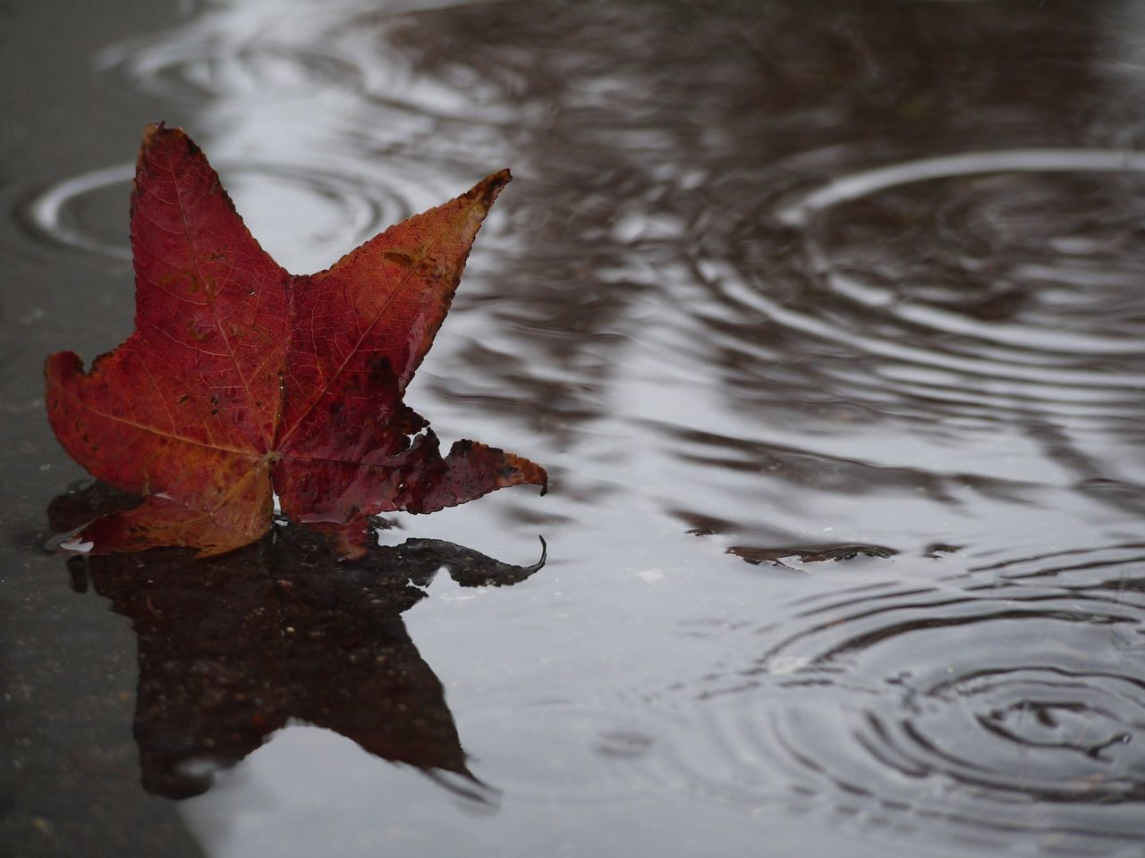 Beautiful stock photos of rain, Autumn, Day, Fallen, Leaf