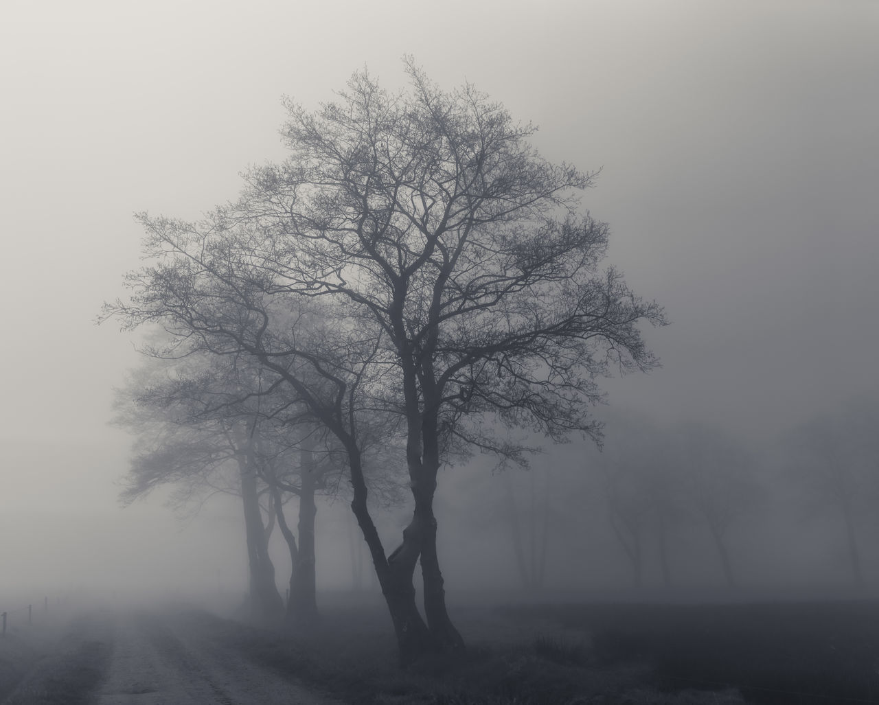 fog, tree, mist, landscape, isolated, tranquility, solitude, bare tree, branch, nature, hazy, lone, tranquil scene, beauty in nature, outdoors, day, no people, bleak