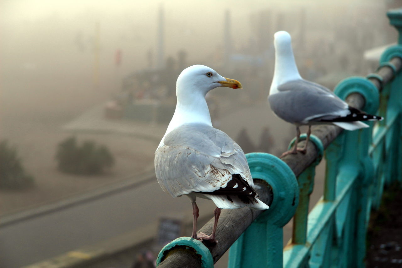 Animal Themes Animal Wildlife Animals In The Wild Beach Photography Bird Brighton Beach Day Fog In The Trees Mist Outdoors Perching Seagulls Weather Photography