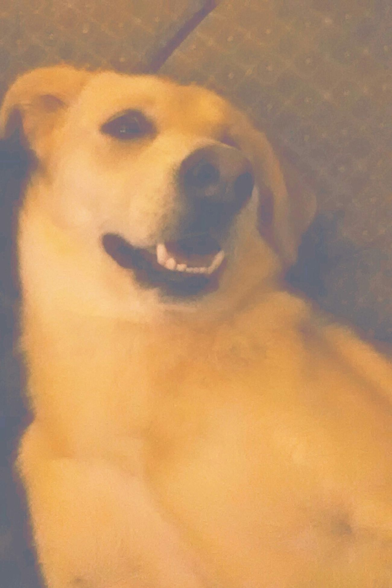 Sasha laying next to her mommie ! she totally cropped me out of the picture by shoving me haha its all good though. I still love her My Babe <3 German Shepherd Husky Collie Mix Baddest Boss  The Love Of My Life ♥