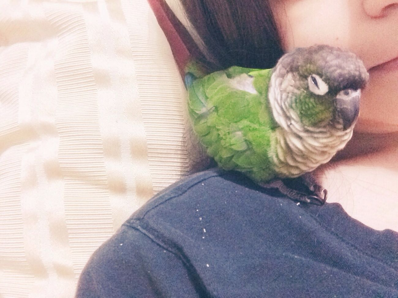 looks like someone's sleeply ? Animals Birds Greencheekconure