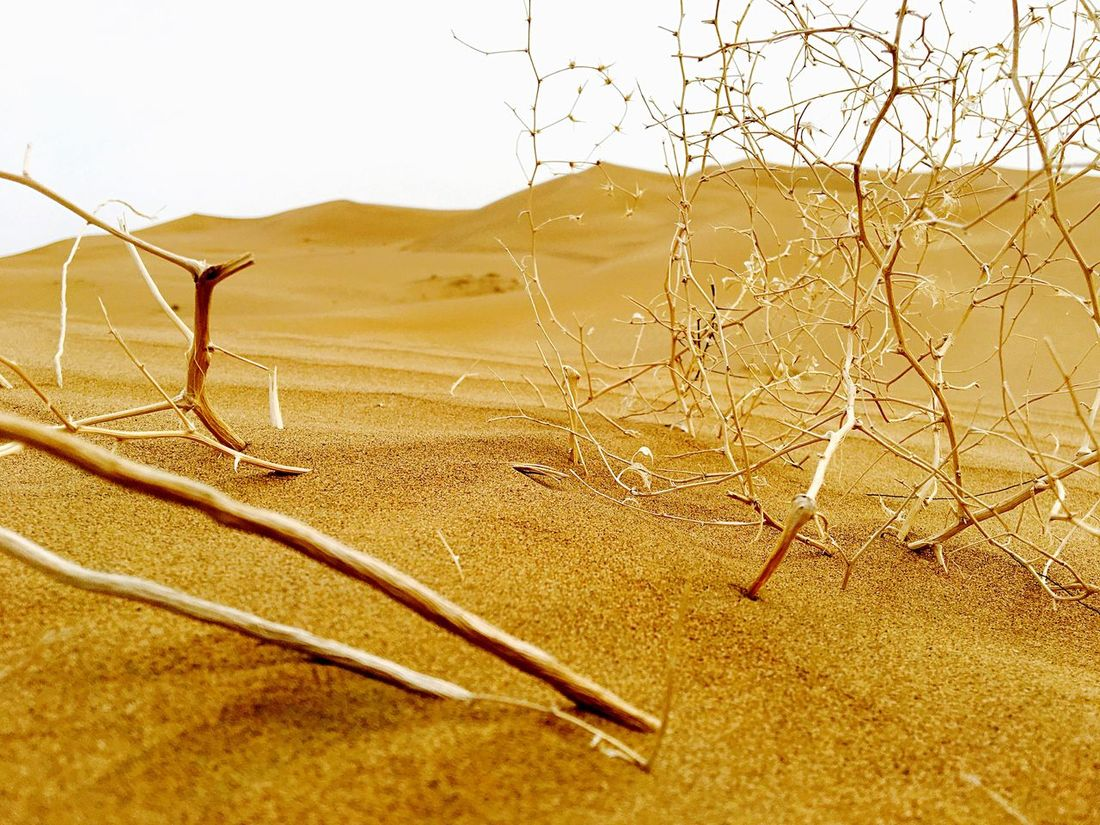 Bushes Desert Sand Nature No People Outdoors Day Landscape Backgrounds Sand Dune Close-up Background Defocus EyeEm Nature Lover The Week On Eyem EyeEm Best Shots EyeEm Gallery IPhoneography Non-urban Scene Scenics Beauty In Nature Miles Away The Week On EyeEm