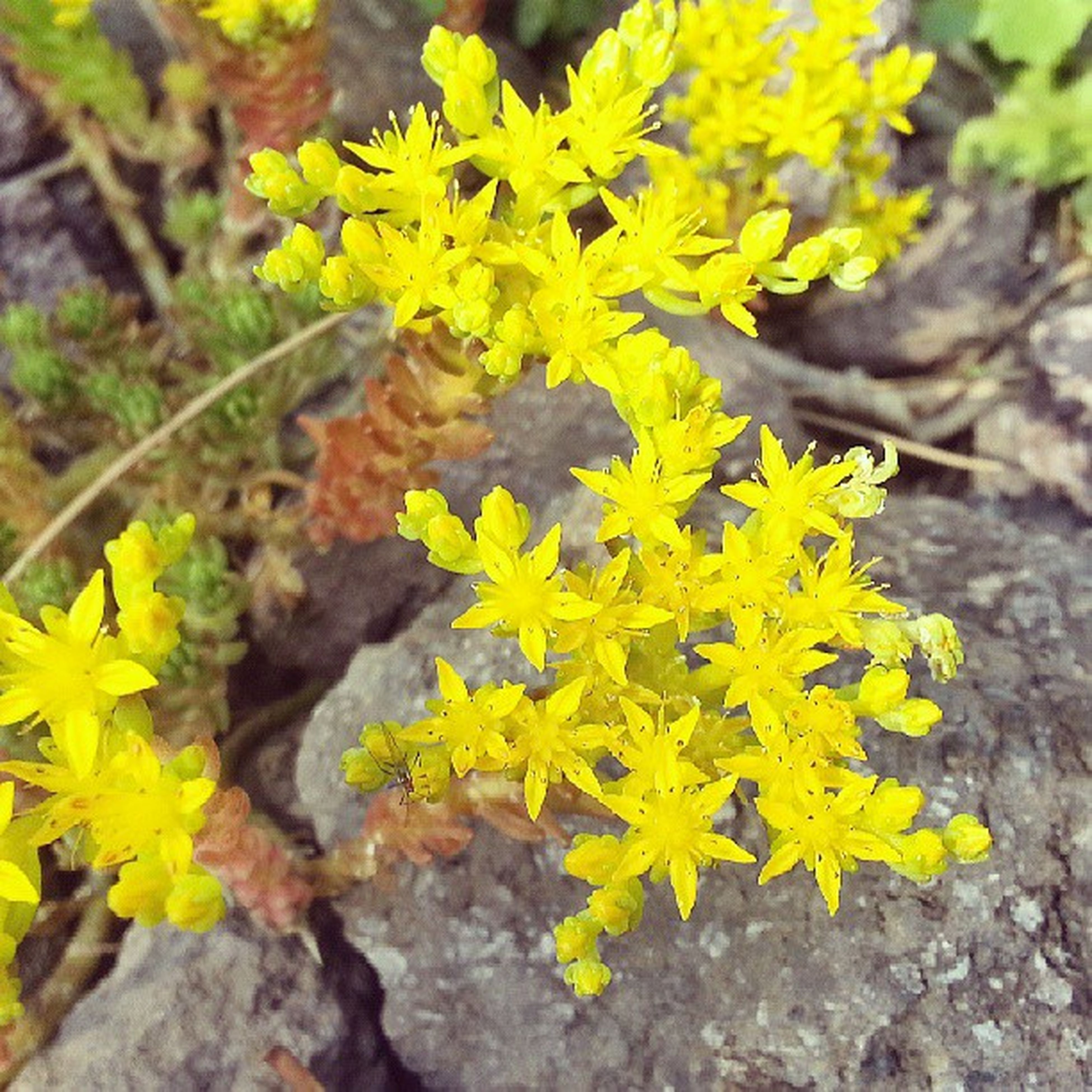 flower, yellow, fragility, growth, freshness, petal, beauty in nature, nature, plant, high angle view, close-up, flower head, blooming, focus on foreground, leaf, day, in bloom, field, outdoors, no people