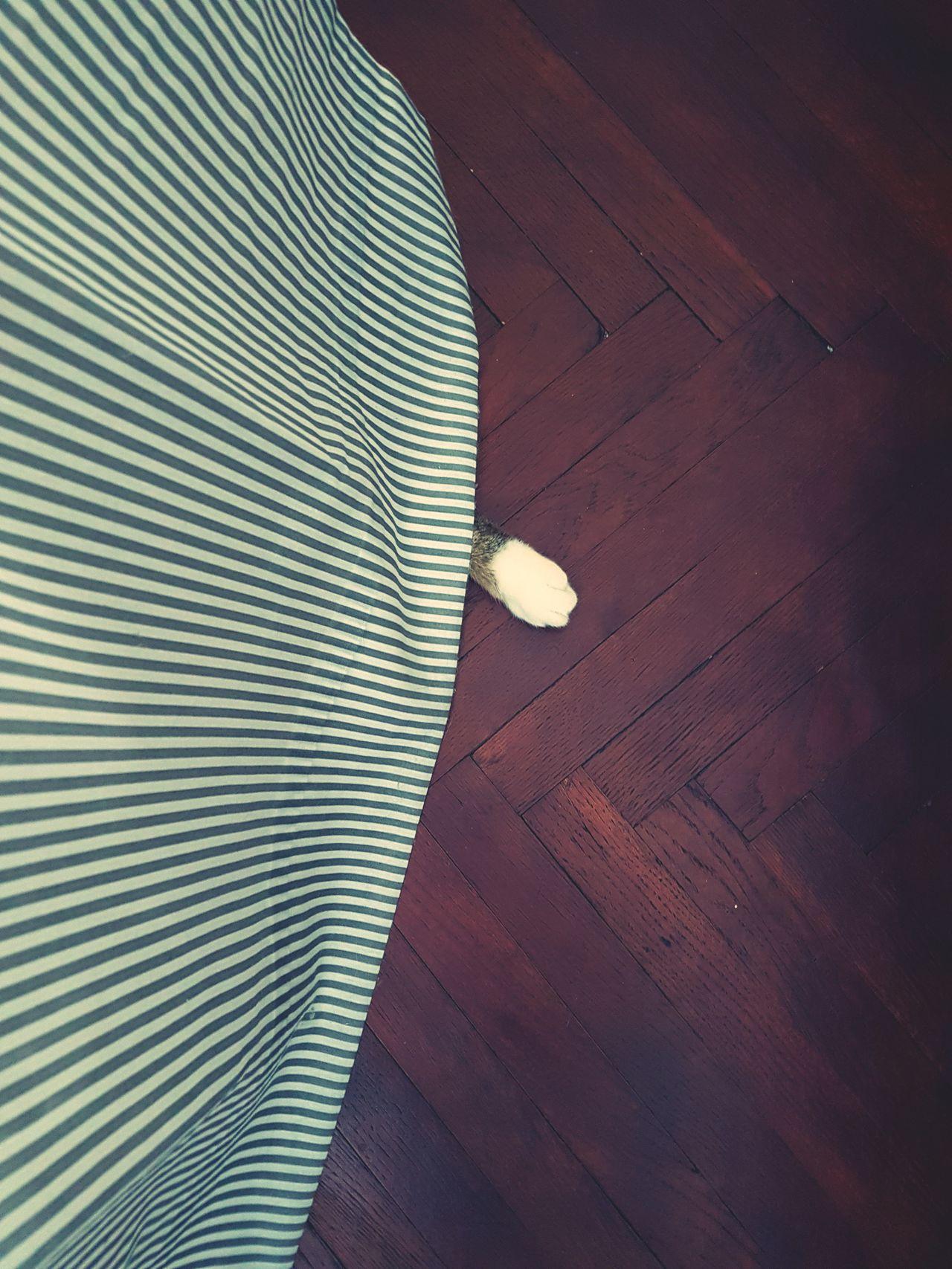 HID Indoors  Hardwood Floor Textile Pattern No People My Cat♥ Hide And Seek White Sock Paw