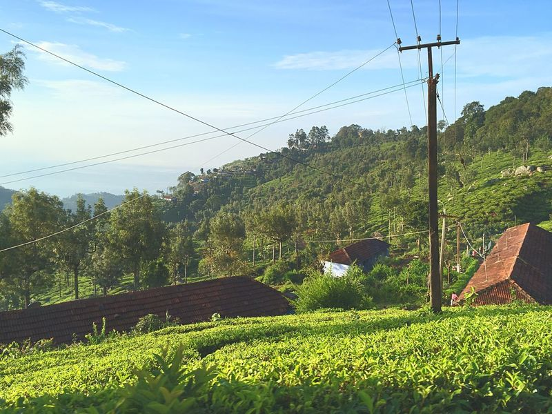 Real life people in tea estates ,south India Power Line  Field Nature Agriculture Growth Rural Scene Power Supply Electricity  Sky Landscape Electricity Pylon Day Outdoors Cloud - Sky Village Houses EyeEm Gallery Beauty In Nature EyeEm Nature Lover Tree Mountain